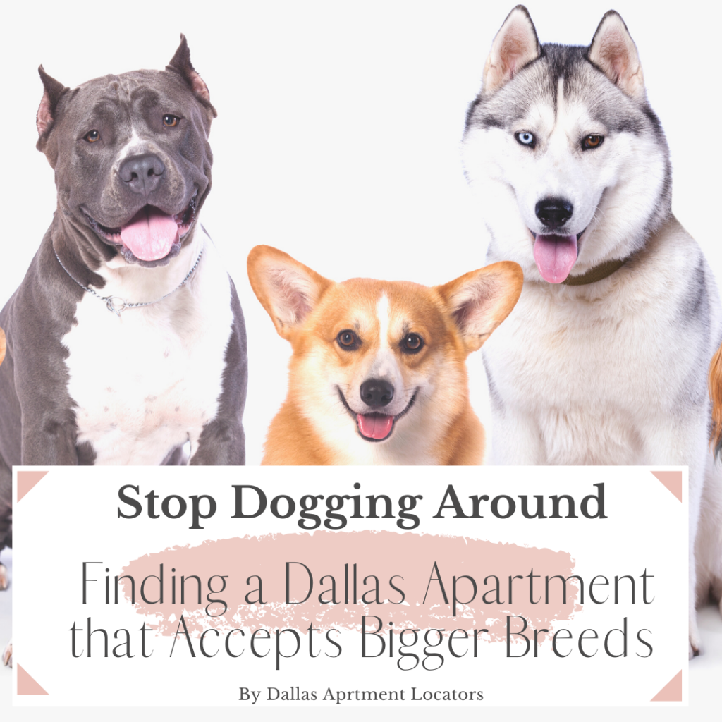 – Finding a Dallas Apartment that Accepts Bigger Breeds